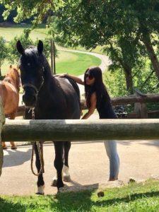 Chakrenbalance Pferd