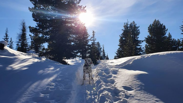 23.09.2020 – Online-Infoabend – Herbst/Winter – Vorbereitung auf die kalte Jahreszeit – Hund, Katze & Pferd